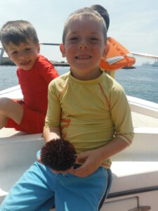 Learning about Echinoidea - sea urchins
